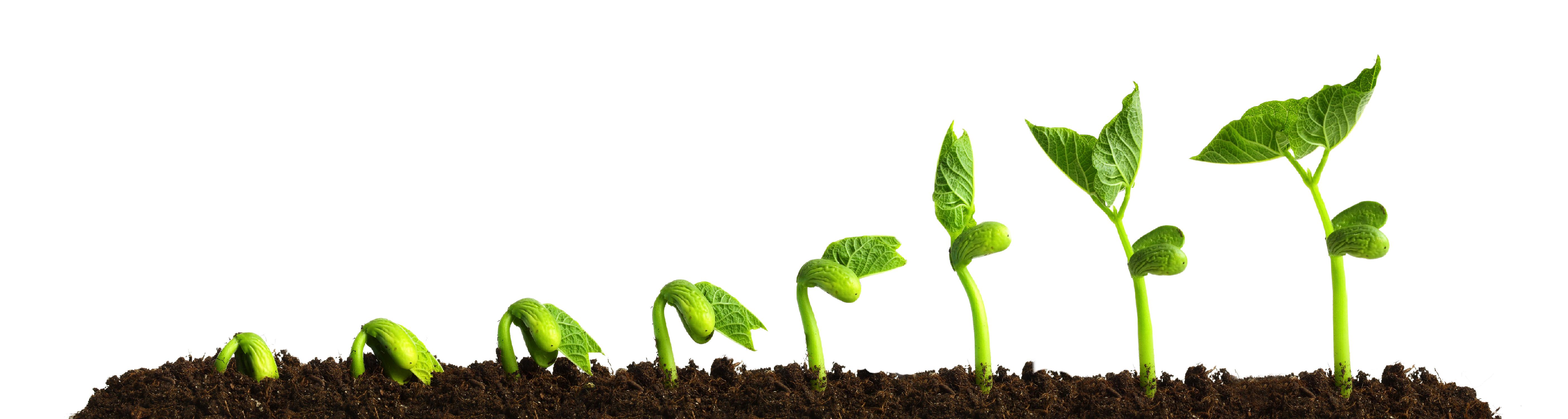 8 preguntas - crecer plantas 2.0